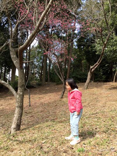 手賀の丘公園2017年3月