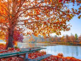 夕暮れに染まる秋空を眺めなら飲むコーヒーにあう曲 vol.1